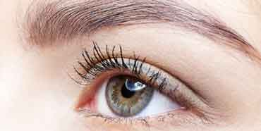 Eyelash & Brow Treatment
